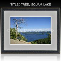 Tree, Squam Lake